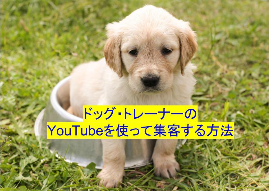 ドッグトレーナー Youtube 集客方法